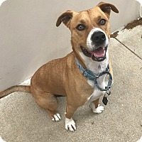 Adopt A Pet :: A - LUKE - Seattle, WA