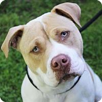 Adopt A Pet :: GOOSE - Red Bluff, CA
