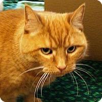 Adopt A Pet :: Pumpkin - Albany, NY