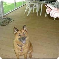 Adopt A Pet :: Taffy - Washington, NC
