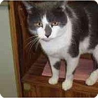 Adopt A Pet :: Jamey - Hamburg, NY