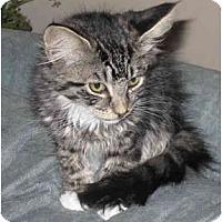 Adopt A Pet :: Cleo - Catasauqua, PA