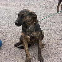 Adopt A Pet :: Talon - Golden Valley, AZ