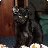 Adopt A Pet :: Vincent (JT) - Little Falls, NJ