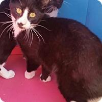 Adopt A Pet :: SIMON - Ocala, FL