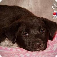 Adopt A Pet :: Emily - Santa Fe, TX