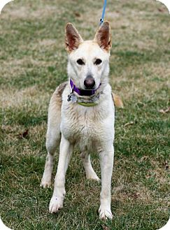 German Shepherd Dog Dog for adoption in Mt. Airy, Maryland - Willow