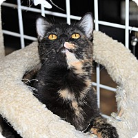 Adopt A Pet :: MOMMA MURPHY - Houston, TX