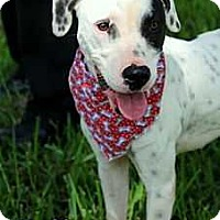 Adopt A Pet :: Bailey - Tampa, FL