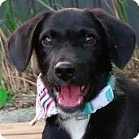 Adopt A Pet :: Nick - San Ramon, CA