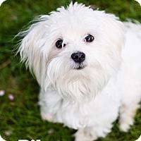 Adopt A Pet :: Riley - Garden City, MI