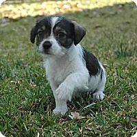 Adopt A Pet :: June - La Habra Heights, CA