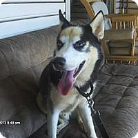 Adopt A Pet :: Bandit - Jacksonville, FL