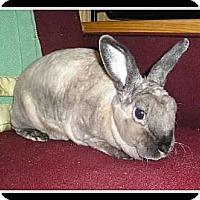 Adopt A Pet :: Brown Sugar - Williston, FL