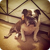 Adopt A Pet :: Jayla - conyers, GA