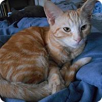 Adopt A Pet :: Nemo - Richland, MI