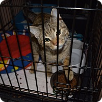 Adopt A Pet :: Arlo - Byron Center, MI