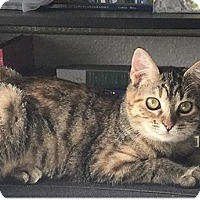 Adopt A Pet :: Gingersnap - Los Angeles, CA