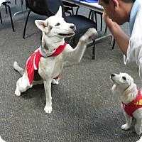 Adopt A Pet :: Whitney - Santa Ana, CA