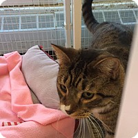 Adopt A Pet :: Morales - Reisterstown, MD