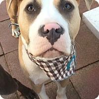 Adopt A Pet :: Tobin - San Diego, CA