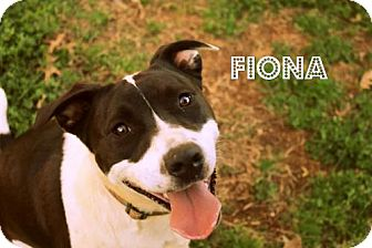 Boxer Mix Dog for adoption in Mocksville, North Carolina - Fiona