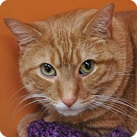 Adopt A Pet :: Tiny - Kettering, OH