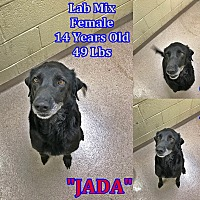 Adopt A Pet :: 1-6 Jada - Triadelphia, WV