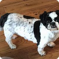 Adopt A Pet :: Tommy - Homer Glen, IL