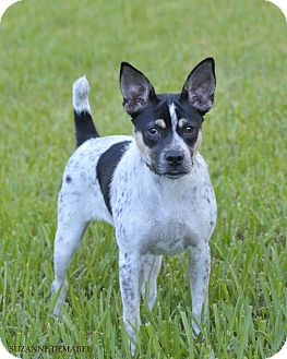 Terrier (Unknown Type, Small) Mix Dog for adoption in Norwalk, Connecticut - Cami