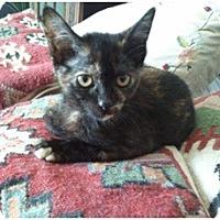 Adopt A Pet :: Ariel - Hayward, CA