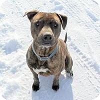 Adopt A Pet :: Tico - Cedar City, UT