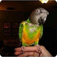 Adopt A Pet :: Rudy - Redlands, CA