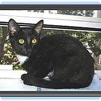 Adopt A Pet :: Sid - Easley, SC