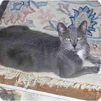 Adopt A Pet :: Tippi - New York, NY