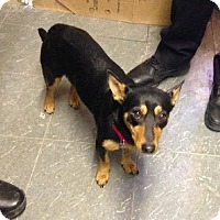 Adopt A Pet :: Gypsy - Manhattan, NY