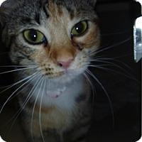 Adopt A Pet :: Jewels - Hamburg, NY
