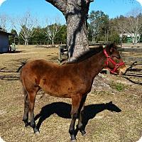 Adopt A Pet :: Chance - Cantonment, FL