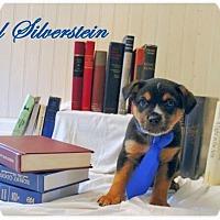 Adopt A Pet :: Shel Silverstein - Austin, TX