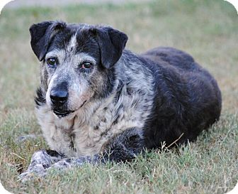 Catahoula Leopard Dog/Labrador Retriever Mix Dog for adoption in Cedartown, Georgia - Lucille