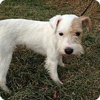 Adopt A Pet :: Junior - Cumberland, MD