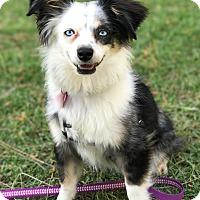 Adopt A Pet :: Orbit - Los Alamitos, CA