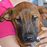 Adopt A Pet :: Indie - CRANSTON, RI