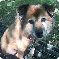 Adopt A Pet :: MAMMY - Franklin, TN