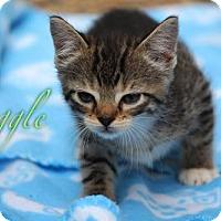 Adopt A Pet :: Buggle 17-0049 - Richardson, TX