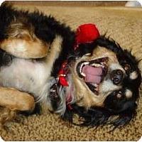 Adopt A Pet :: Red Red - Arlington, TX