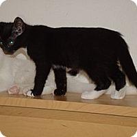 Adopt A Pet :: Gabriella - Scottsdale, AZ