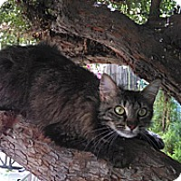 Adopt A Pet :: Sparkle - Sacramento, CA