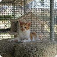 Adopt A Pet :: Rizzoli - El Cajon, CA