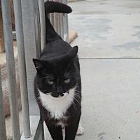 Adopt A Pet :: BUSTER - San Pablo, CA